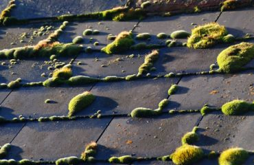 The removal of moss from a roof.